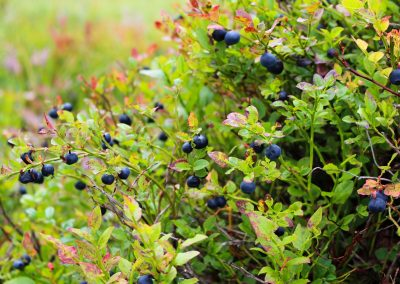 Flavonoids for Heart Health and Cancer Prevention